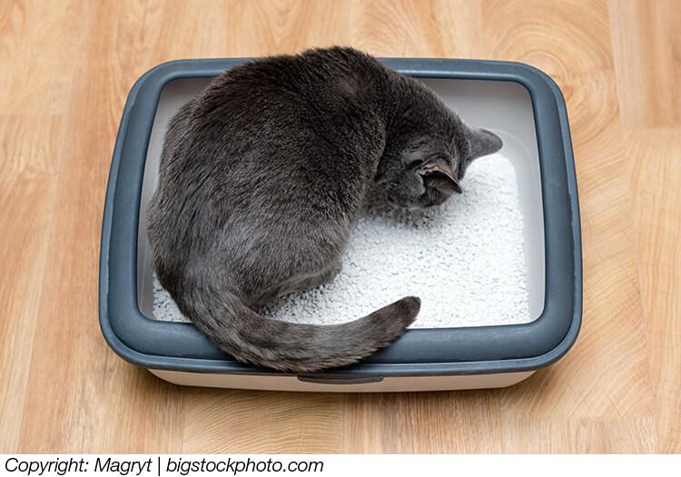Die Katze Hat Durchfall Mögliche Gründe Und Tipps Dafür